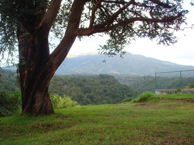Silver dollar Eucalyptus and volcano in Panama
