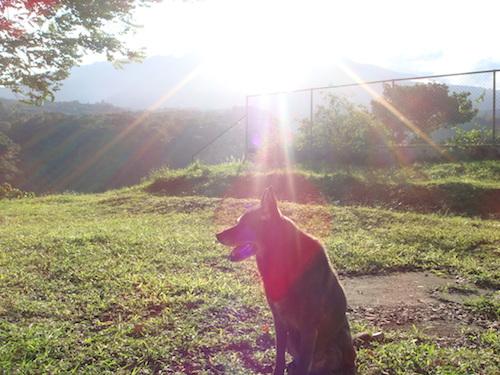 Christa Wojo's dog
