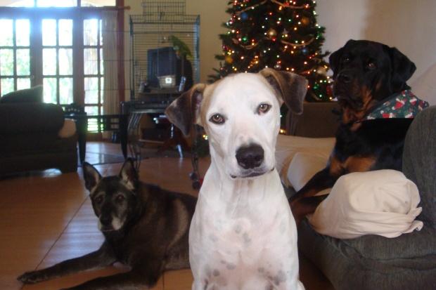 Roscoe and Christa Wojo's dogs.