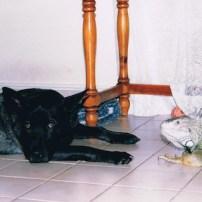 Christa Wojo's dog Roscoe with an iguana