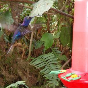 Pics from La Paz Waterfall Gardens Costa Rica